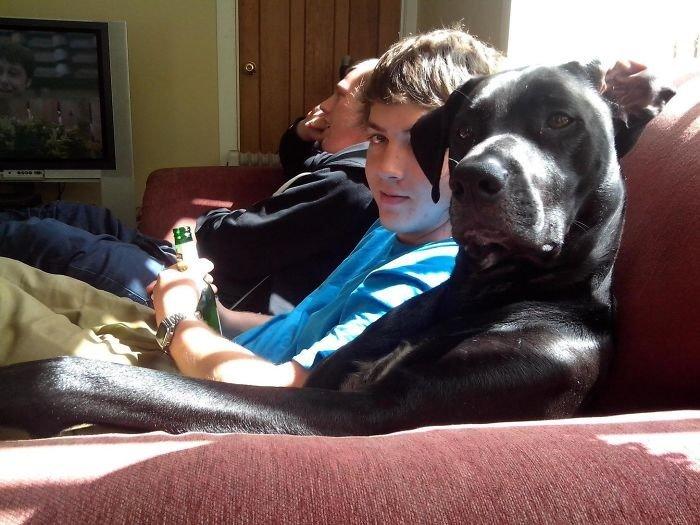 Моя семья братья меньшие, животные, наши копии, позы, псы как люди, смешно, собака и хозяин, собаки