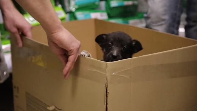 Продавец поинтересовался зачем парню больной щенок и предложил забрать его бесплатно видео, выбор, не такой как все, щенок