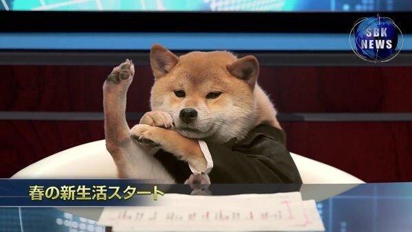 Ведущий, которого мы заслуживаем животные, интересное, новости, фотоприкол