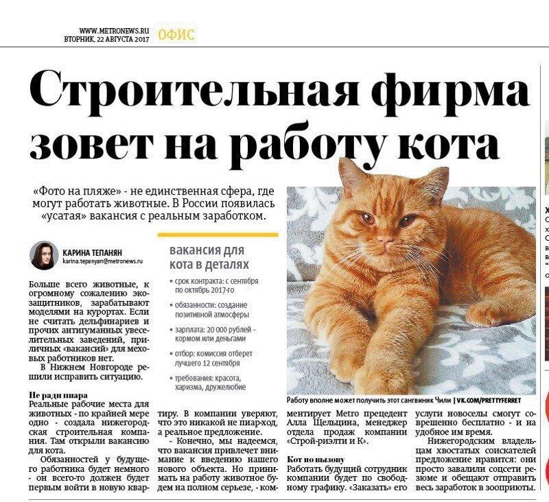 Доброжелательные новости, которые сообщают животные животные, интересное, новости, фотоприкол
