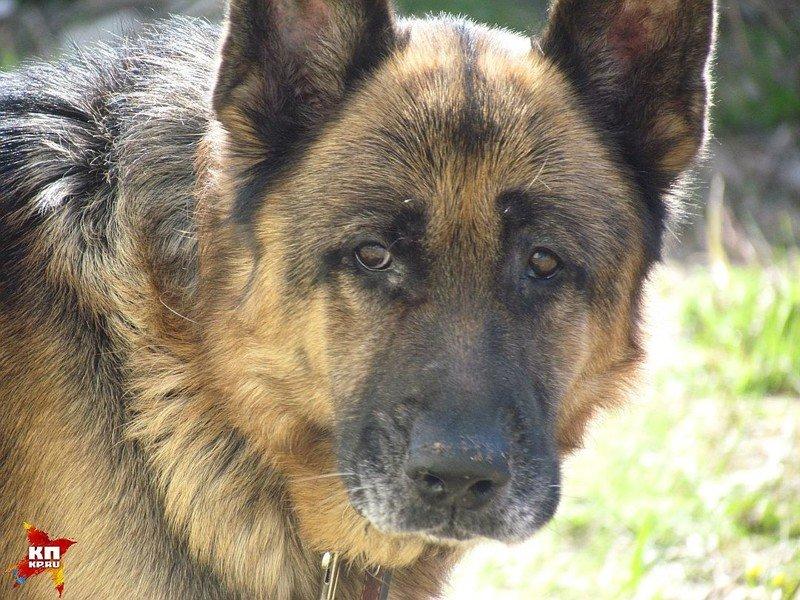 Спустя семь лет разлуки они нашли своего пса собака, спасение, чудо