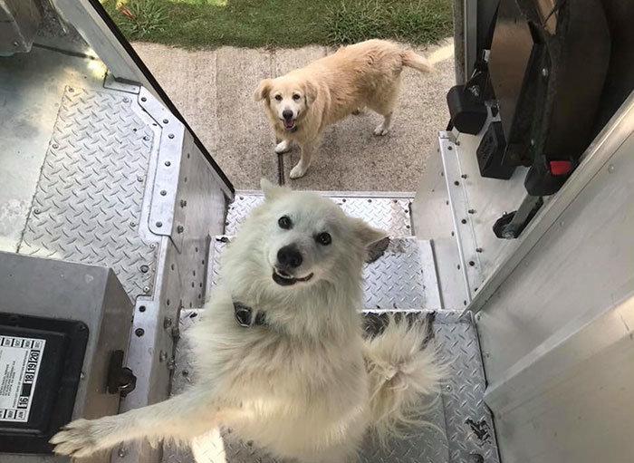 Все почтальоны UPS, которые любят собак, с удовольствием публикуют в этой группе снимки четвероногих друзей, встреченных ими на пути домашние животные, животные, собака, собака - друг человека, собака - лучший друг, собаки, фото собак