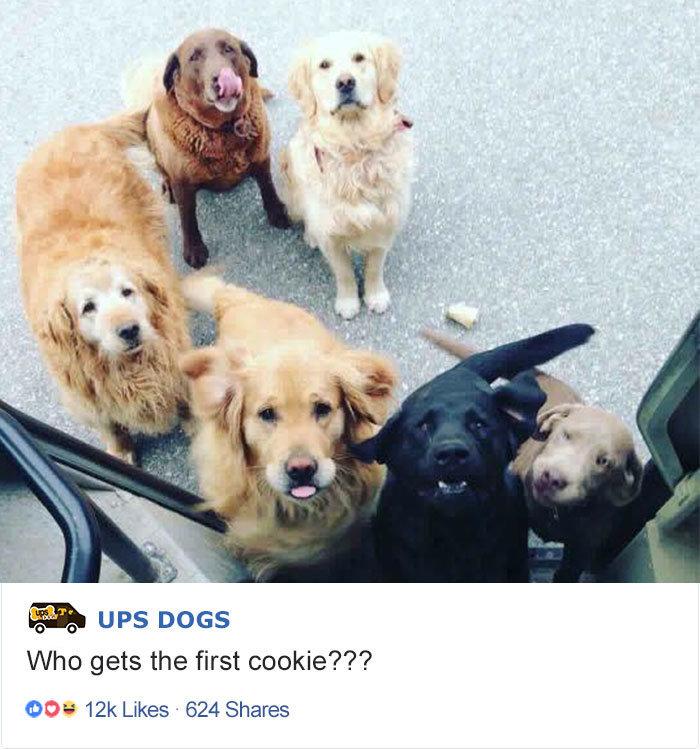 Кто получит первую печеньку? домашние животные, животные, собака, собака - друг человека, собака - лучший друг, собаки, фото собак