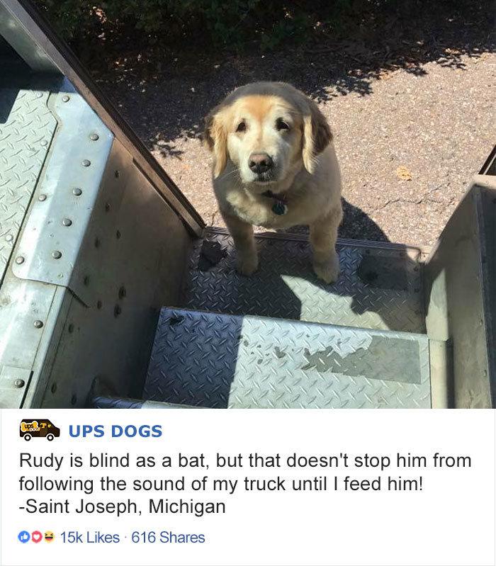 Собаки постоянных клиентов уже привыкли к почтальонам и ждут их с нетерпением домашние животные, животные, собака, собака - друг человека, собака - лучший друг, собаки, фото собак