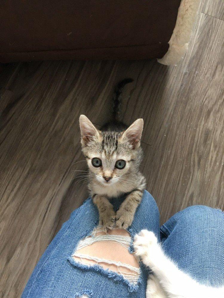 Крошечный чудо-котенок размером в два раза меньше обычных котят получил второй шанс на жизнь животные, кошки, новость