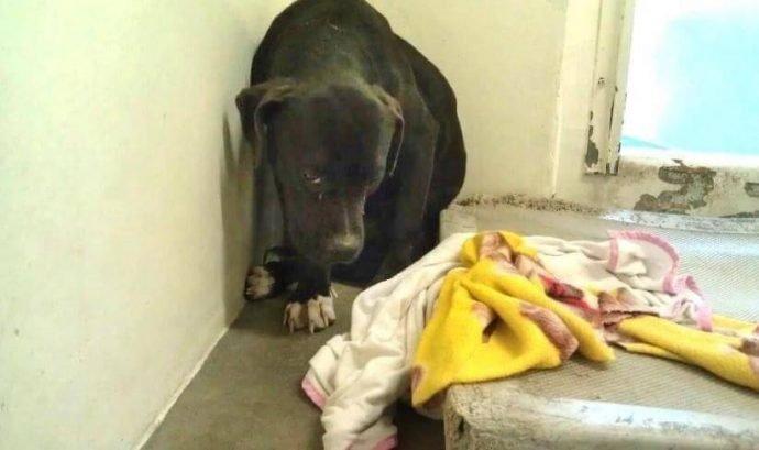 Он лежал и смотрел в пол, ожидая врачей с последним уколом животные, кошки, новость, собаки