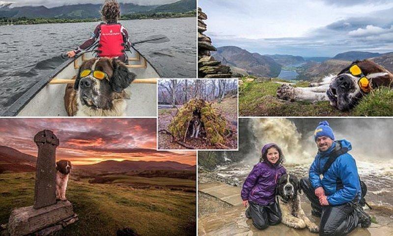 Этот сенбернар - настоящий любитель путешествий! байдарки, животные, интересно, необычно, походы, путешествия, сенбернар, собаки