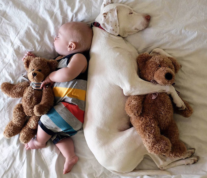 Спасенная собака просто неразлучна с этим малышом доверие, малыш, неразлучные, пойнтер, семья, собака, умилениe