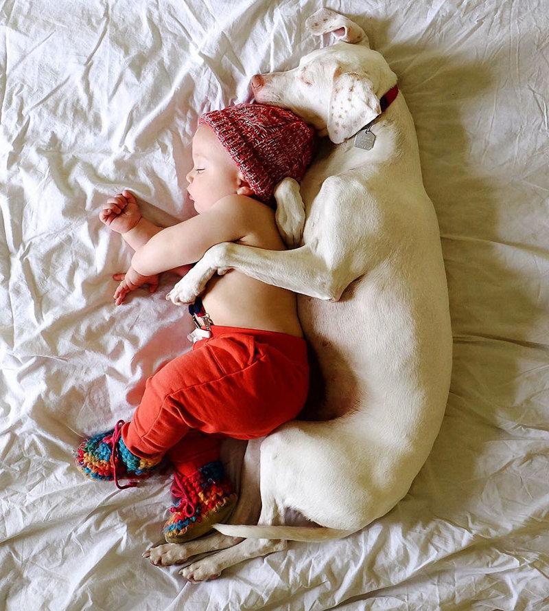 Нора - очень пугливая собака, но маленькому Арчи она доверяет... доверие, малыш, неразлучные, пойнтер, семья, собака, умилениe