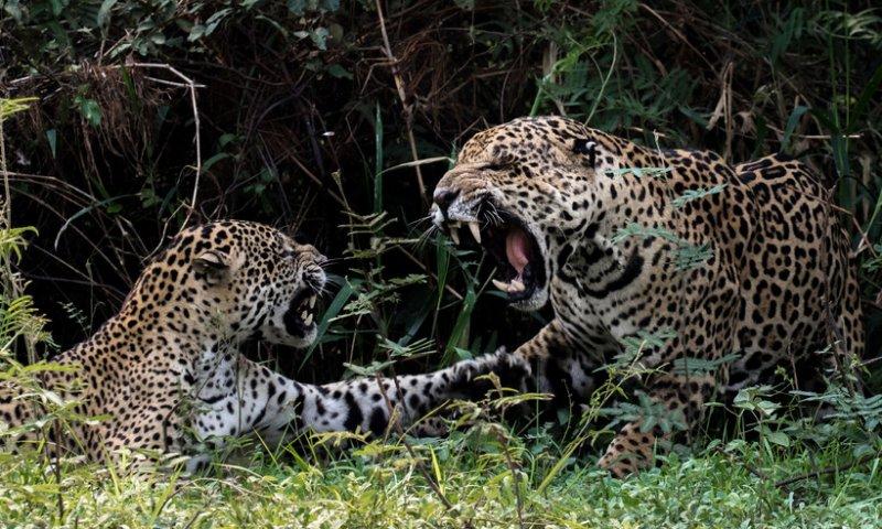 20 снимков животных, от которых невозможно оторвать взгляд животные, интерсеное, фото