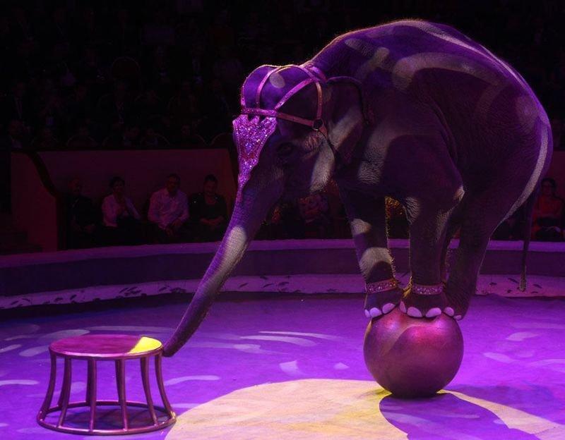 Италия приняла закон, запрещающий цирки с животными животные, италия, цирк