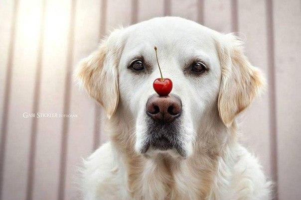 Выдержка этого пса просто поражает интересное, пёс, фото