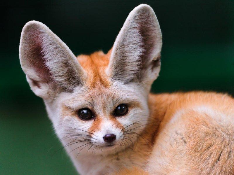 Удивительные существа, в существование которых вы поверите не сразу  животные, интересное, фото