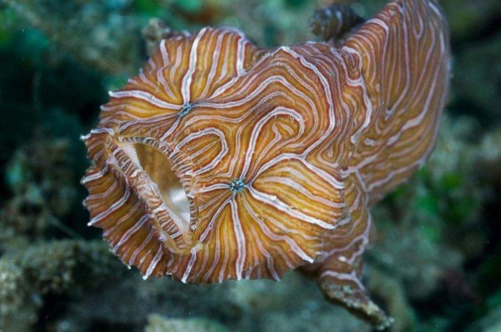 Психоделическая рыба-лягушка интересное, океан, фото