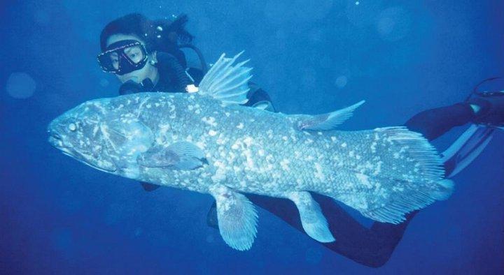 Латимерия индонезийская интересное, океан, фото