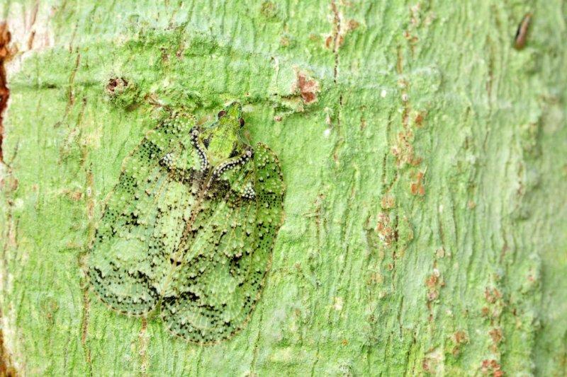 Насекомые - мастера маскировки  интересное, насекомые, фото