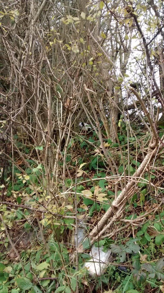 Мужчина нашёл в лесу необычных обитателей, которые могли погибнуть  другие животные, животные, новость, экзотические животные