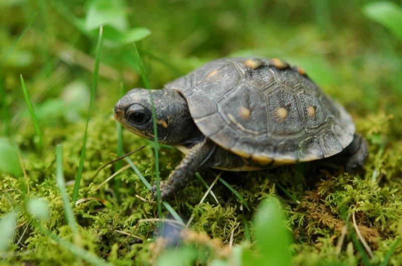 27. А черепахи ползают медленно, потому что у них не бывает дедлайнов. дикая природа, животные, фото