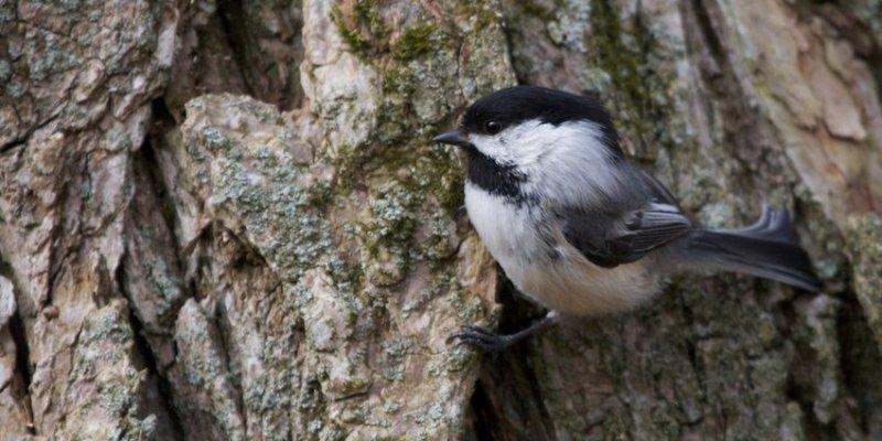 8. А ещё вне офиса есть милые маленькие птички. дикая природа, животные, фото