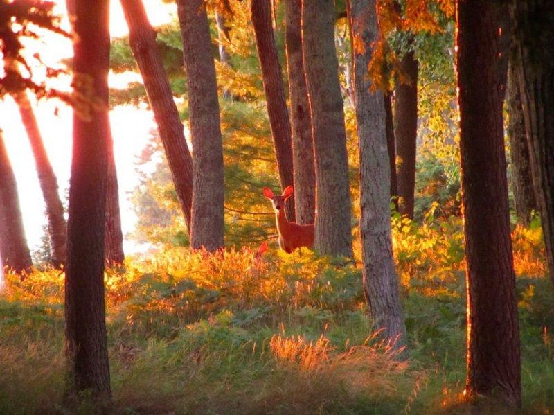 11. И маленькие оленята, которых фотографы застают врасплох. дикая природа, животные, фото
