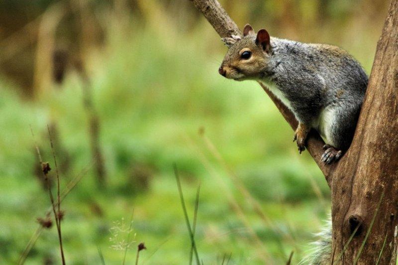 17. Белки, собирающие падающие с деревьев жёлуди. дикая природа, животные, фото