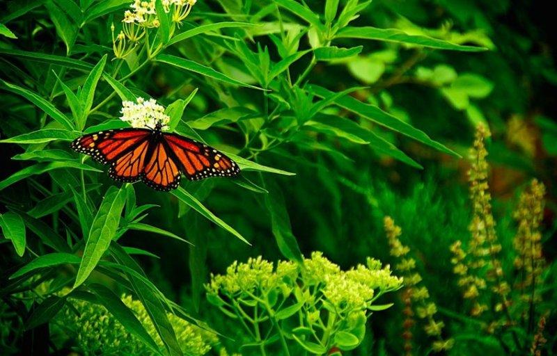 5. Бабочки. дикая природа, животные, фото