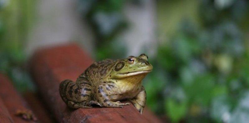 33. За пределами вашего офиса жабы сидят на брёвнах. дикая природа, животные, фото