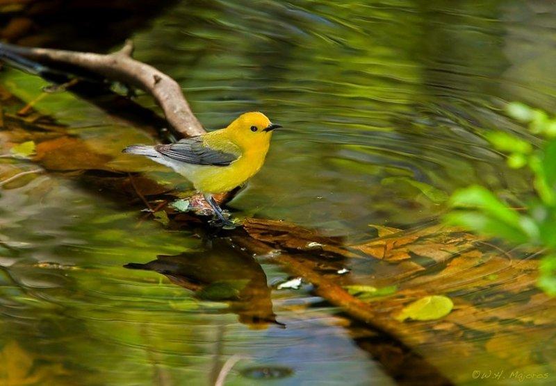 29. Певчие птицы поют. дикая природа, животные, фото