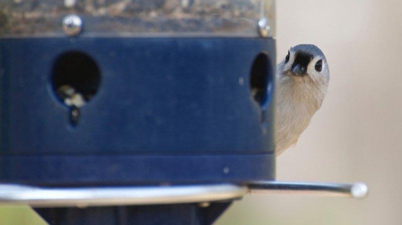 22. И каждая птица знает, где висит её кормушка. дикая природа, животные, фото