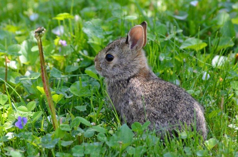 16. Маленькие крольчата. дикая природа, животные, фото