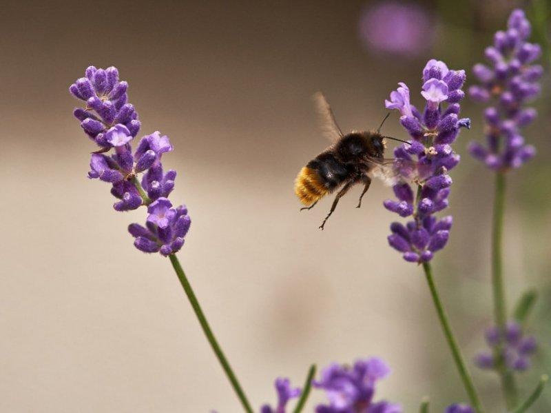 40. И пчёлки тоже. дикая природа, животные, фото