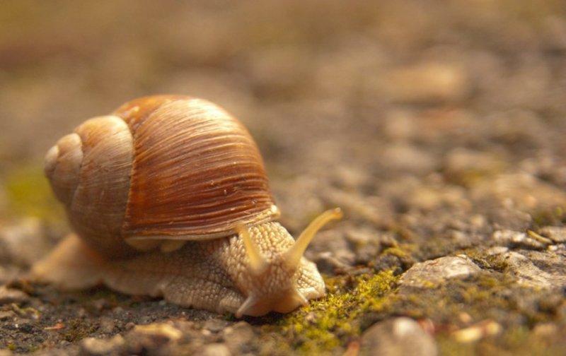 26. Вне вашего офиса улитки плевать хотели на то, как бежит время. дикая природа, животные, фото