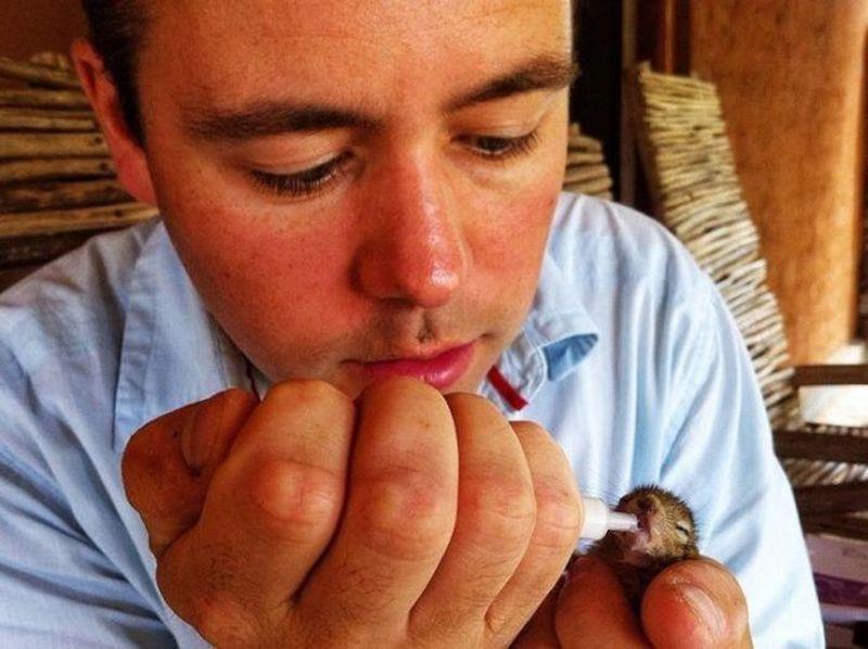 Оператор BBC спас маленького бельчонка белка, дикая природа, добро