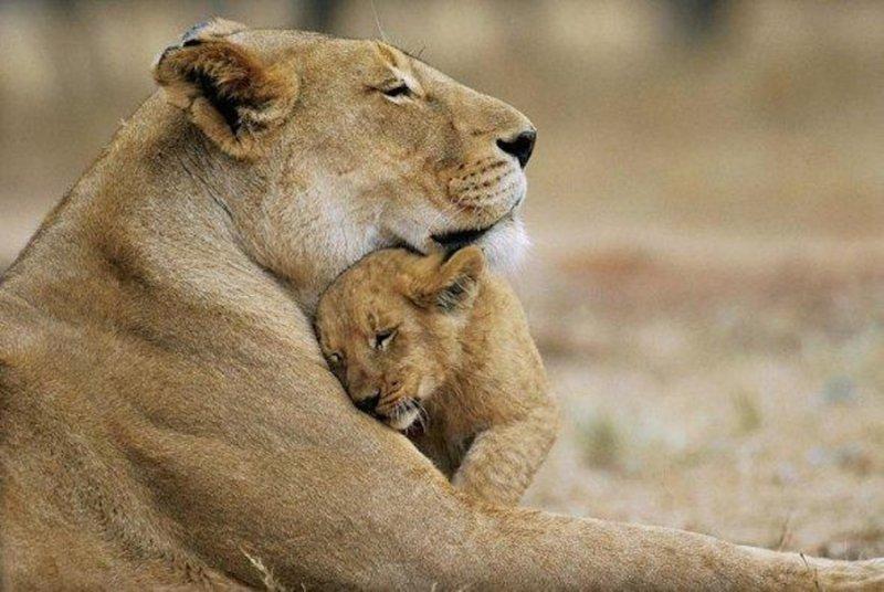 Фотографии, которые показывают любовь к детям  животные, интерсеное, фото