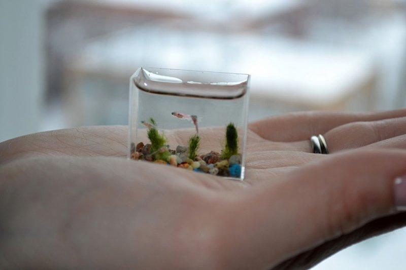 Самый маленький в мире аквариум с рыбками аквариум, интересное, рыбки, фото