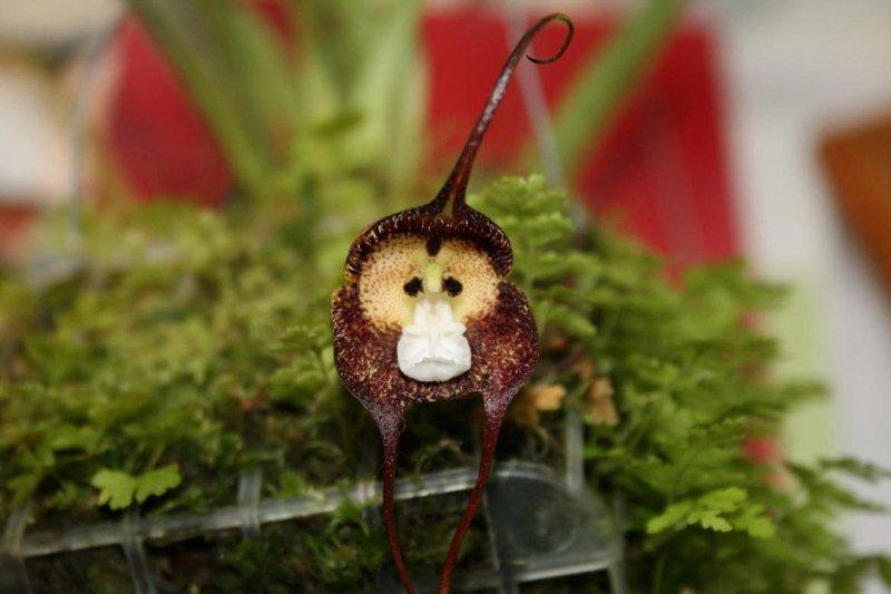 Маленькие обезьяночки в цветах  обезьяны, фото, цветы