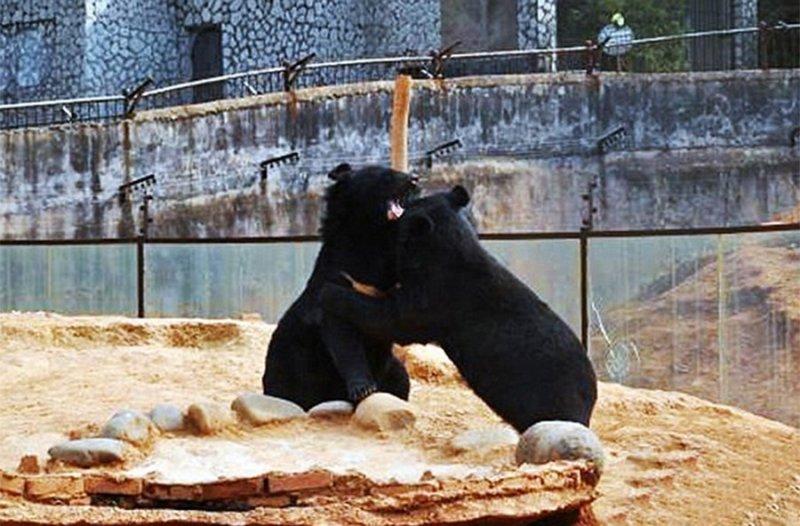 Китаец два года думал что медвежата - это щенки  интересное, китай, новость, прикол