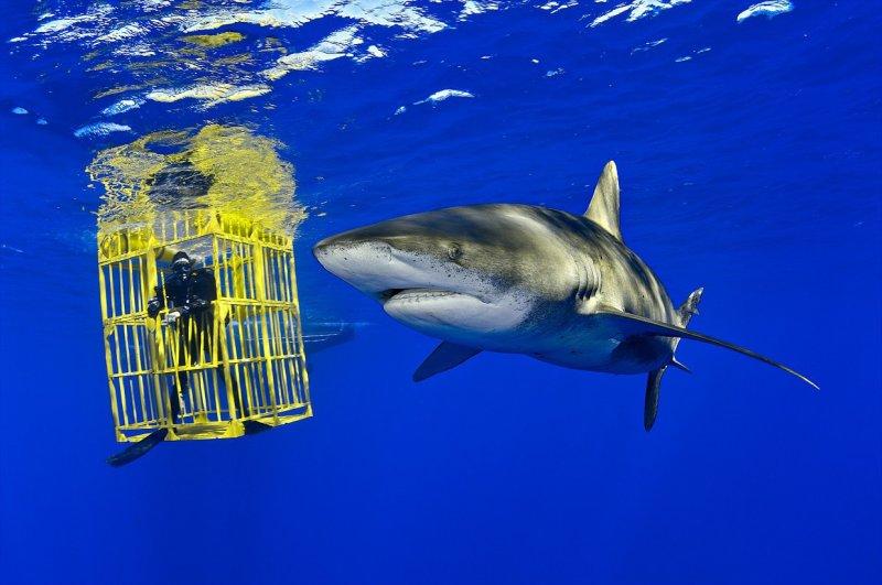 Длиннокрылая акула и биолог Уэс Прэтт, Багамские острова вода, интересное, море, рыбы