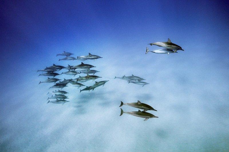 Рыбы семейства хирурговых, атолл Восток, Тихий океан вода, интересное, море, рыбы