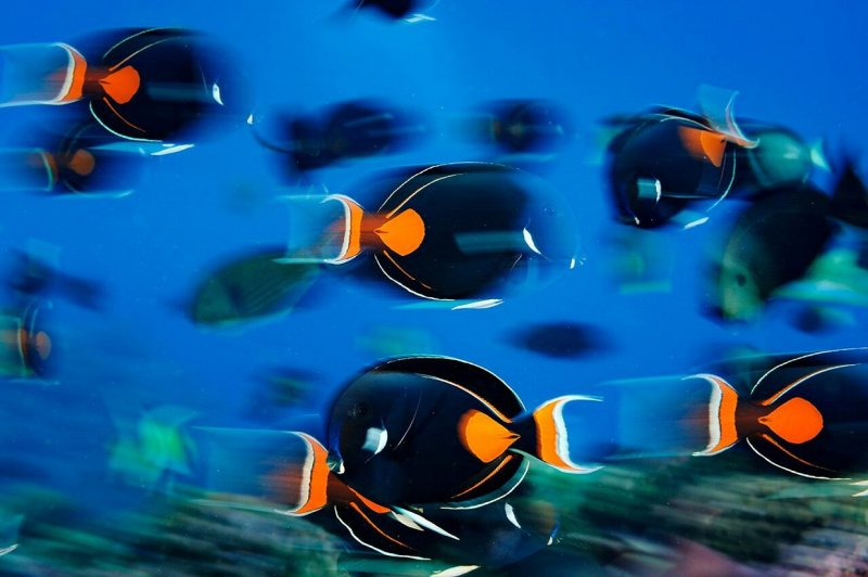 Кожистая черепаха у острова Пику, Азорский архипелаг, Португалия вода, интересное, море, рыбы