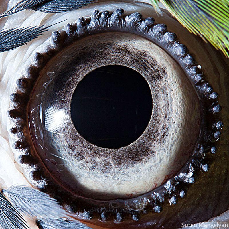 Глаз попугая глаза, интересное, фото