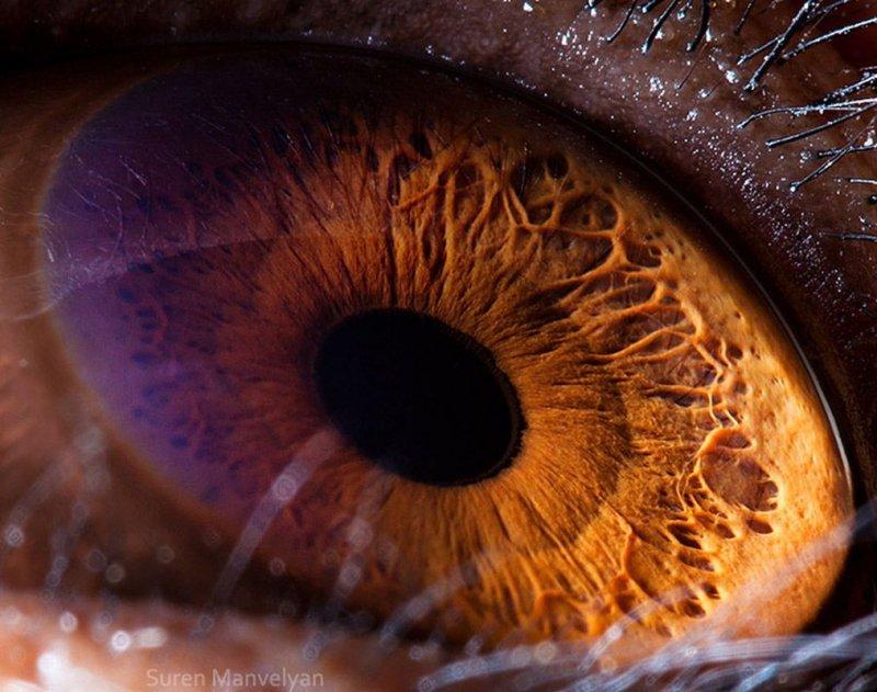 Фотографии глаз животных глаза, интересное, фото