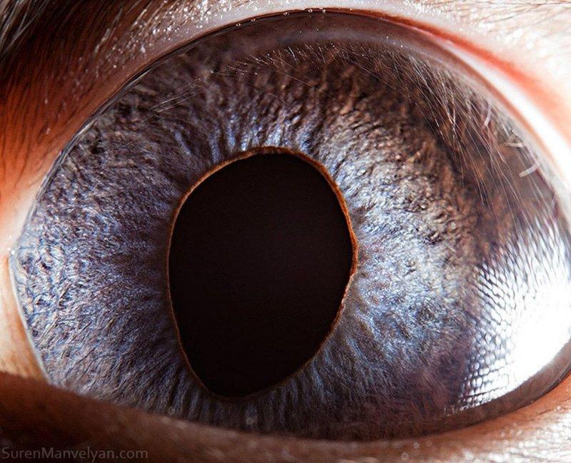 Глаз сиамской кошки глаза, интересное, фото