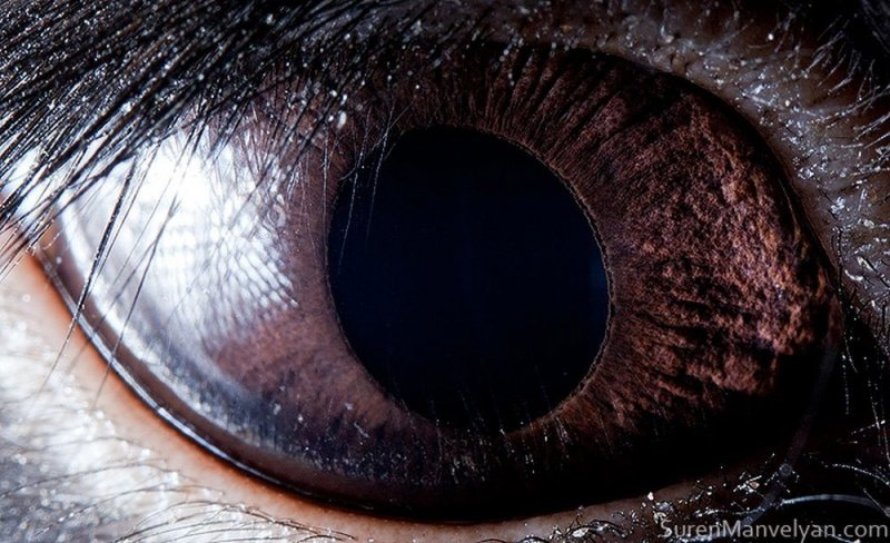 Глаз чёрного кролика глаза, интересное, фото