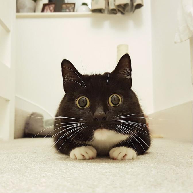 Эта необычная кошечка стала звездой интернета  instagram, интересное, кошка, фото