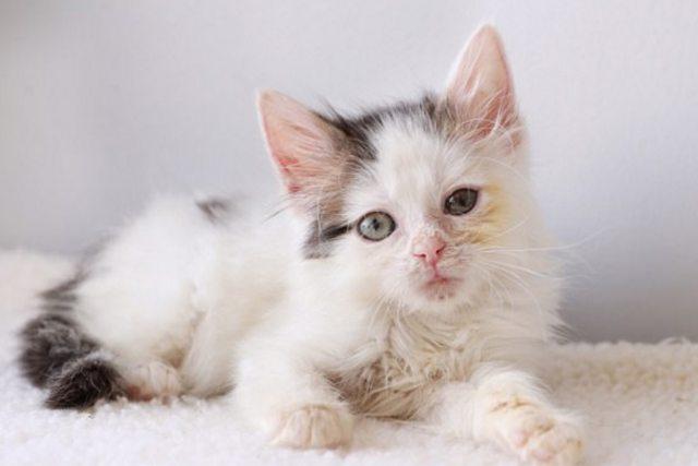 Дог ненавидит кошек, но его кровь помогла спасти зрение котёнку  кот, котёнок, собака, спасение, фото