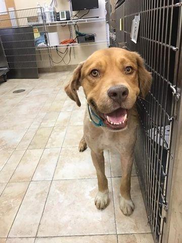 Его отовсюду выгоняли, и он доживал свои последние дни интересное, пёс, собака, спасение, фото