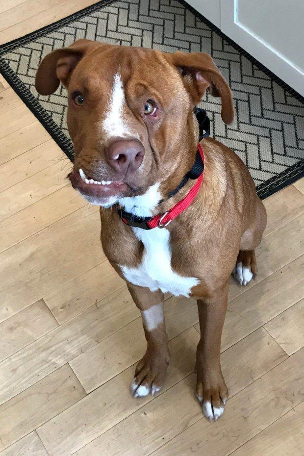 История собаки, чей характер такой же необычный, как и мордочка история, собака, фото