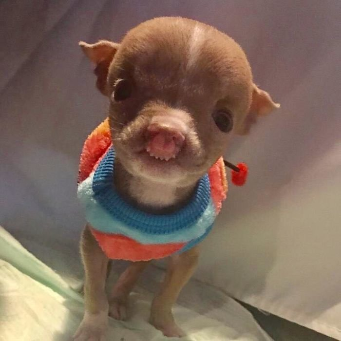 Хозяйка отказалась усыплять пса из-за его патологии, и продолжила бороться за его жизнь  пёс, спасение, фото