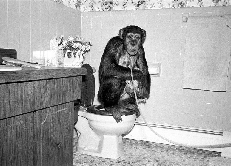 Кати, шимпанзе, самка, 7 лет. интересное, обезьяны, фото